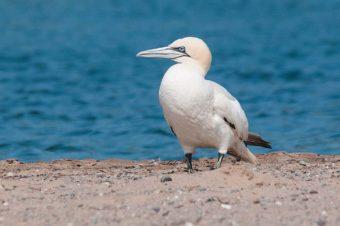 Birds of Nova Scotia